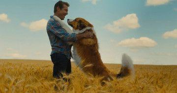 Вийшов трейлер фільму «Подорож хорошого пса»